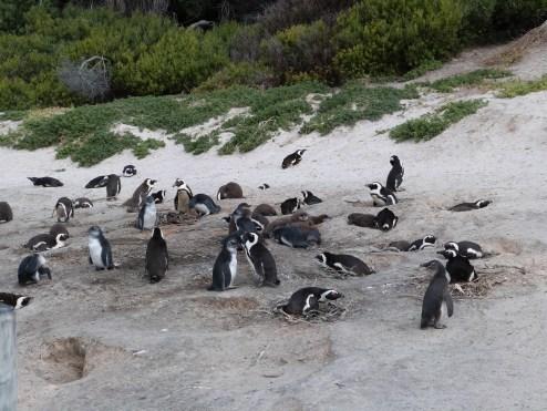 The Colony on the Beach
