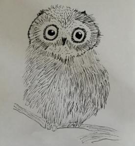 My little owl