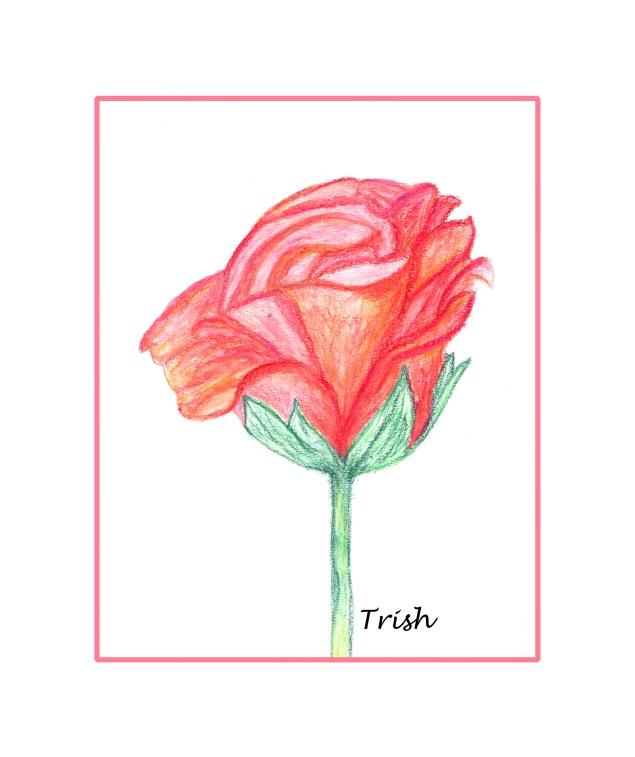 Foot drawn Rose.