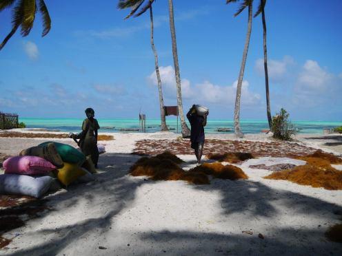 My volunteer experience on the island paradise of Zanzibar..