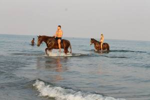 Our amazing horse ride with Kande Horses ending with bareback riding in Lake Malawi..!!