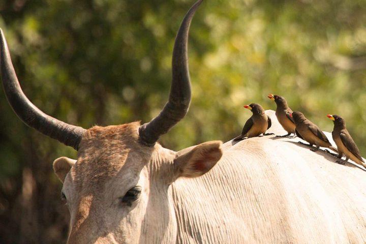 Gambia photography | Wetlands | Gambian wildlife