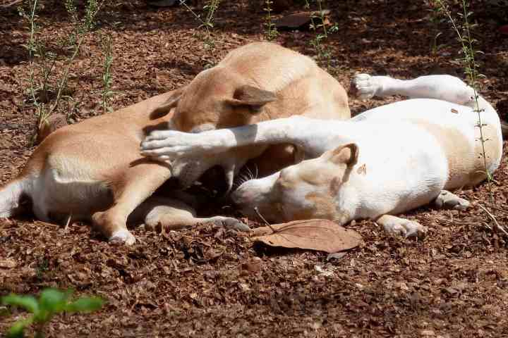 Footsteps eco-lodge Gambia | Annie and Seven | Dog rescue