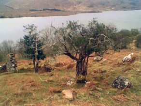 Holly by Loch Maree