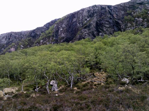 Gleann Dubh ancient woodlands