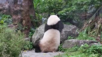 Panda and Penguins at Taipei Zoo