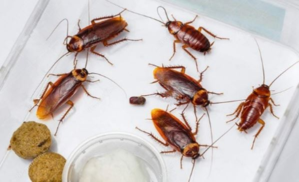 How To Get Rid Of Roaches In Kitchen Drawers | Wow Blog