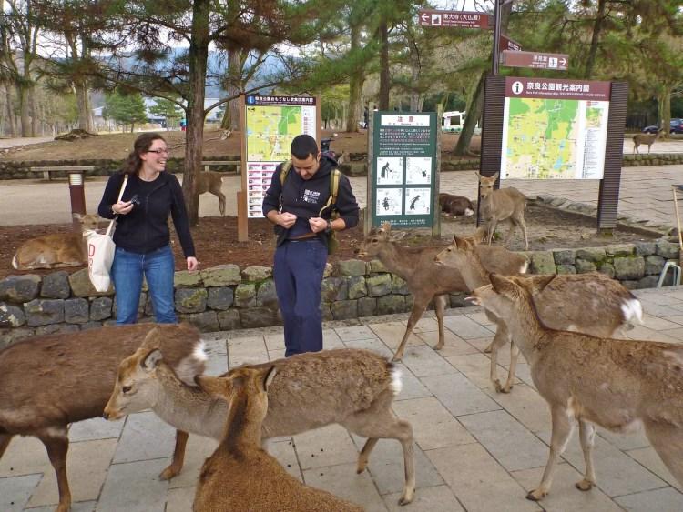 Cervos em Nara