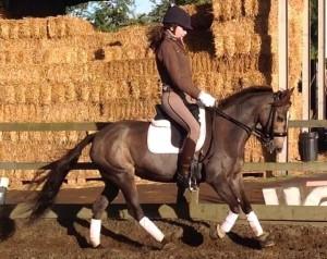 Forageplus helps Bog Pony