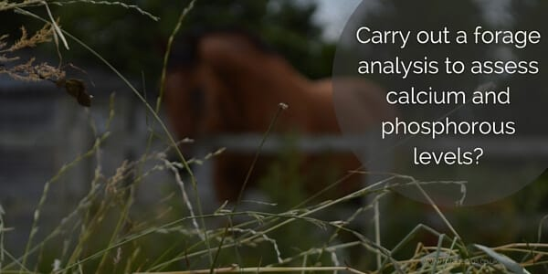 Carry out a forage analysis for your horse
