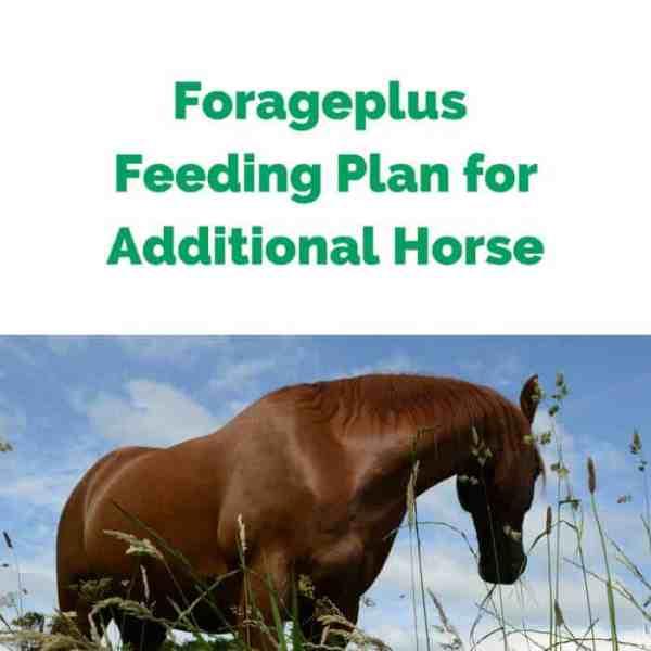 Forageplus-Feeding-Plan-for-Additional-Horse.jpg