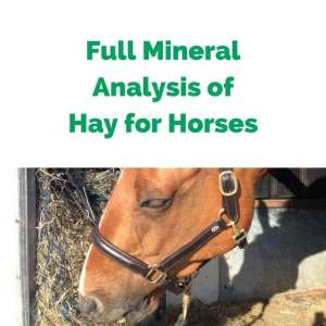 Forageplus-Full-Mineral-Analysis-of-Hay-for-Horses.jpg