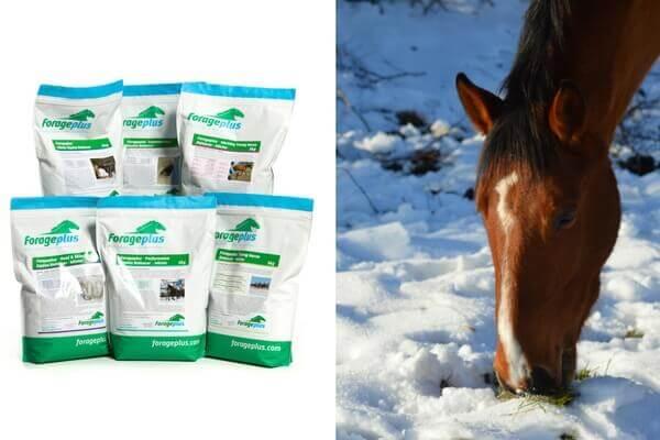 Forageplus-Winter-Horse-Feed-Balancers