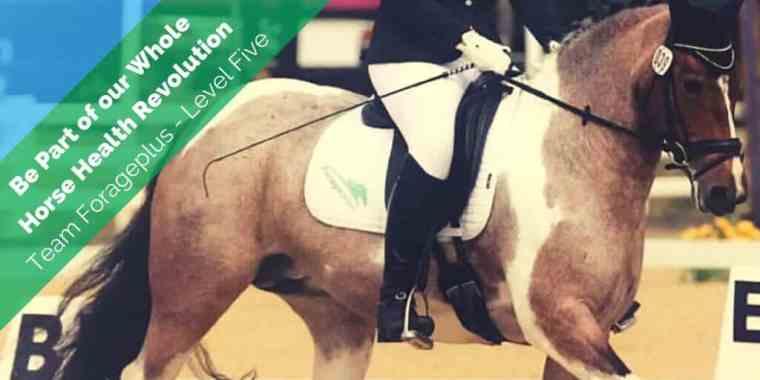Team Forageplus Horse Sponsorship Level Five