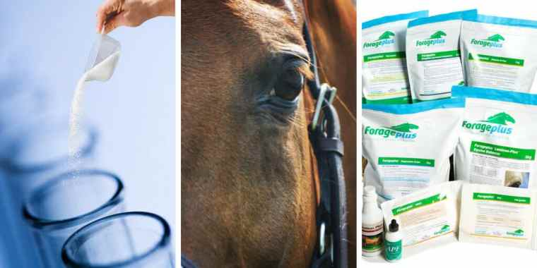 Forageplus Best Quality Horse Feed Ingredients