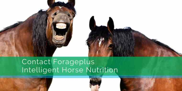 Contact Forageplus Intelligent Horse Nutrition