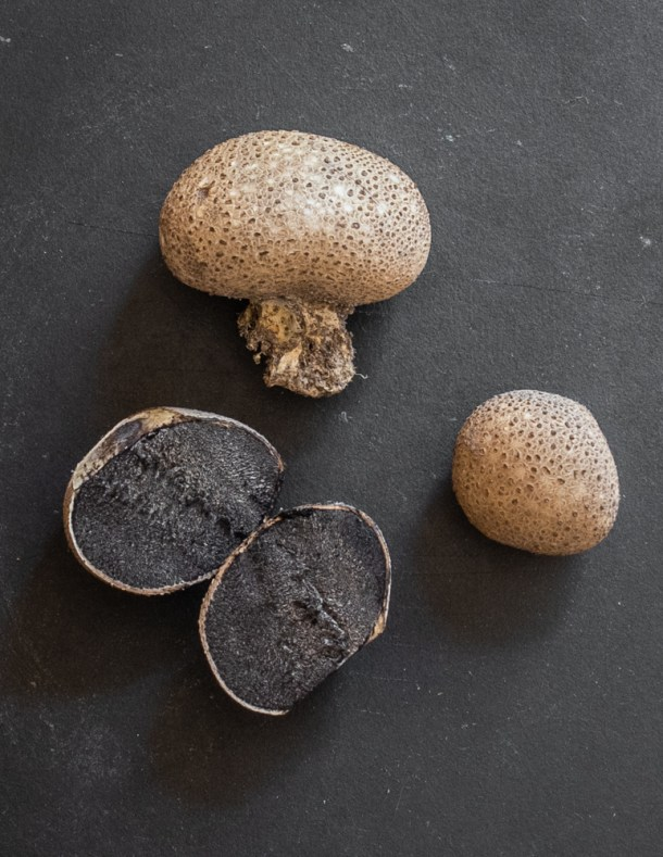 Scleroderma citrinum or pigskin poison puffball a puffball look a like