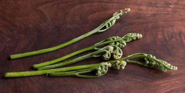 Edible Bracken Fern or Pteridium aquilinum