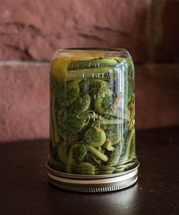 Crunchy ostrich fern fiddlehead pickles