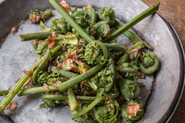 Edible ostrich fiddlehead ferns from wisconsin