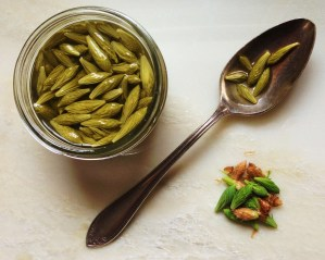 Spruce Tip Pickles capers