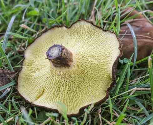 grydon mushrooms forager chef alan bergo