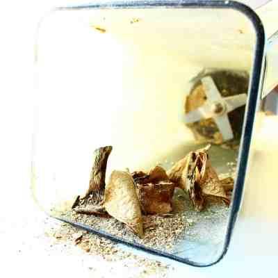 stinging nettle tortelli in lactarius broth