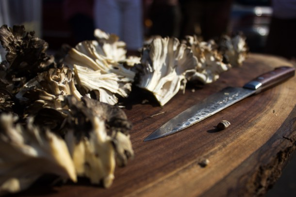 hen of the woods 2014