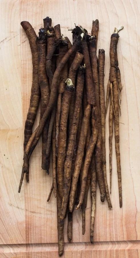 burdock or gobo root wild burdock root