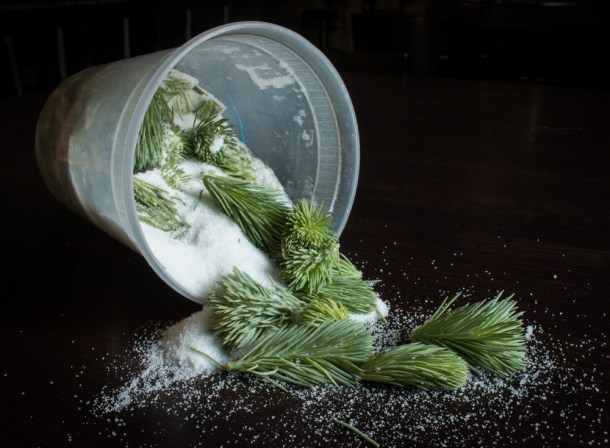 Spruce Tips in Sugar