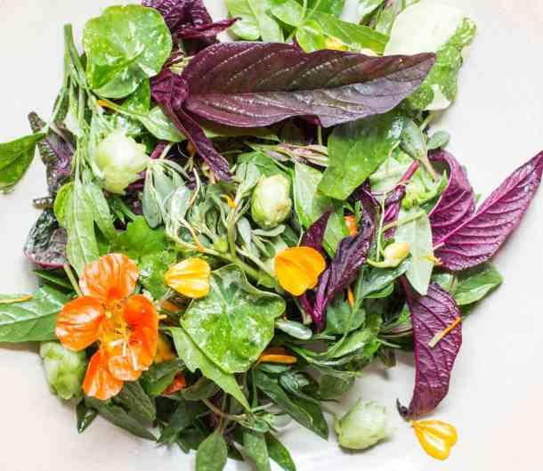 Dotty's Wild Green Salad