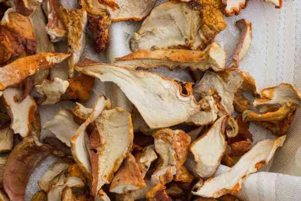 dried-lobster-mushrooms
