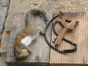 Squirrel Hunting: Photo credit Slingshotforum.com
