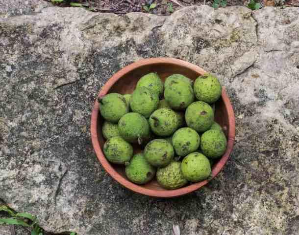 young black walnuts