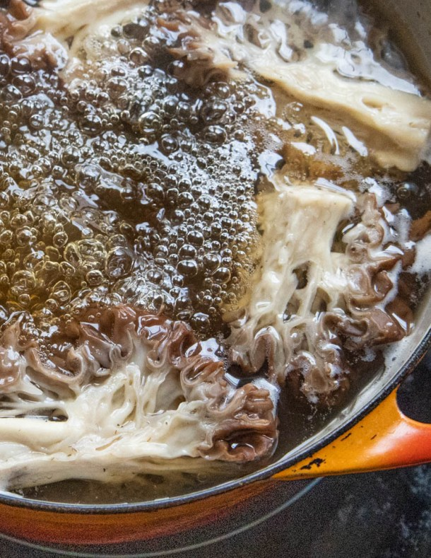 Boiling Gyromitra caroliniana