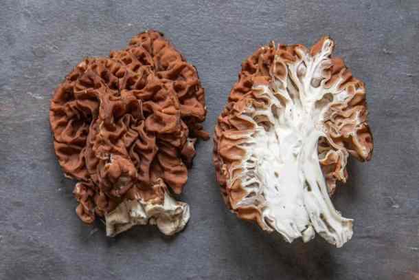 Gyromitra caroliniana