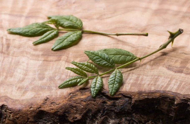 zanthoxylum leaves kinome leaves, sansho