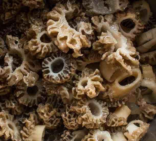 Sliced Morel Mushrooms