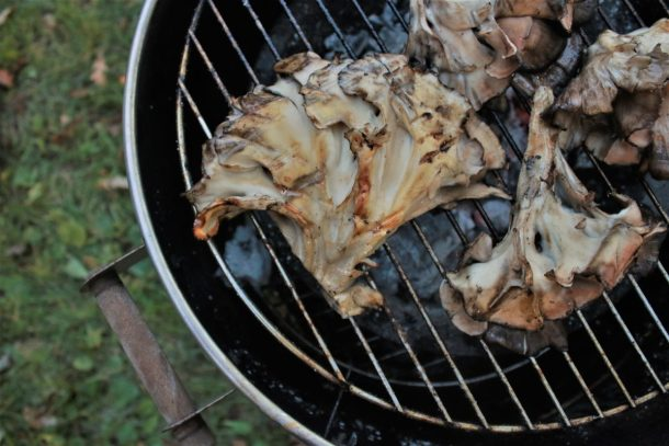 grilled hen of the woods mushroom
