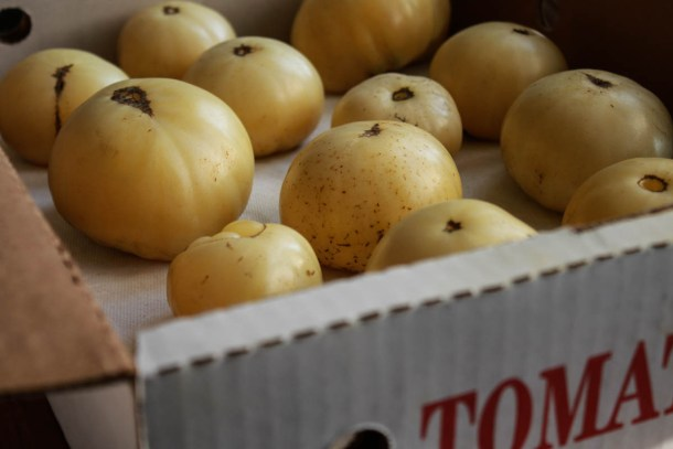 white tomatoes