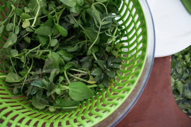 How to forage and store wild greens