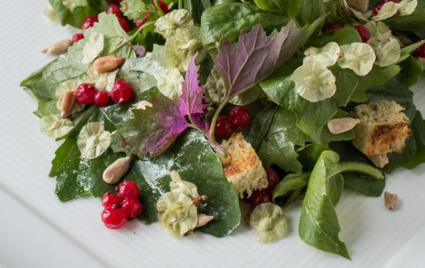 Lamb's quarter and chickweed salad with elm samaras and preserved red currants