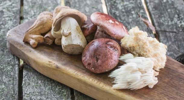 Porcini, Hericium, Hygrophorus Russula and Club Mushrooms