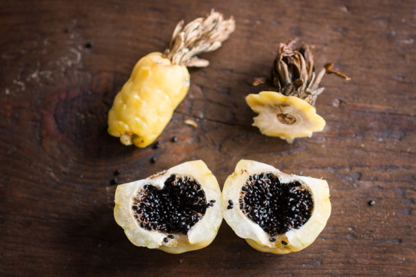 Edible barrel cactus fruit from arizona