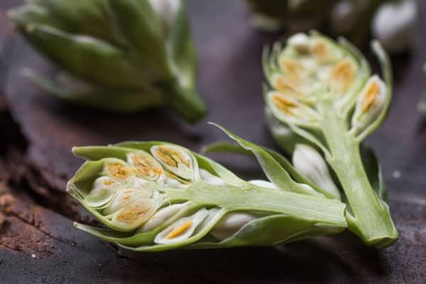 Eating Hosta Flower Buds