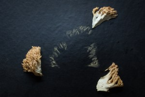Spore print of Ramaria botrytis the pink tipped coral mushroom