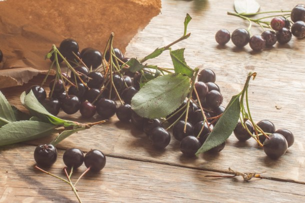 Aronia berries, chokeberries, or Aronia melanocarpa