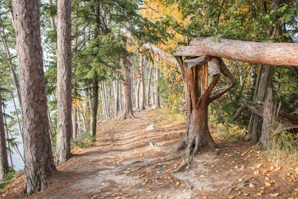 Hiking an Esker in Northern Minnesota (Scenic State Park)