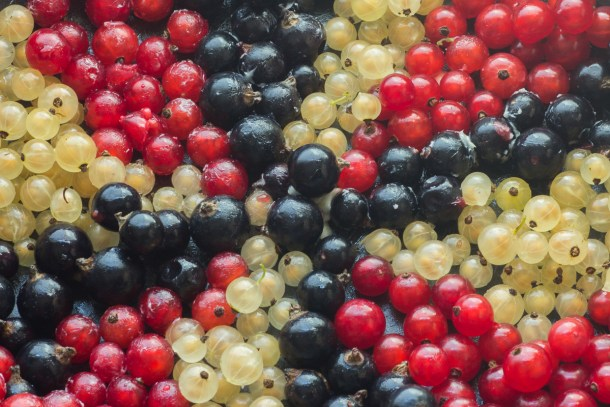 Black, red, and white currants