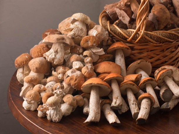 Leccinum and porcini wild mushrooms from Minnesota